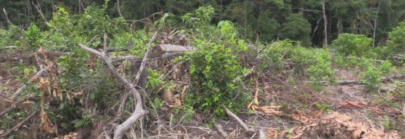 Deforestacion en putumayo-finca del cabildo de corinto